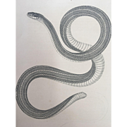 1860 U.S. P. R. R. Surveys Lithograph Print Small-Headed Striped Snake Plate # XIII