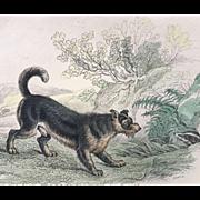1800's Jardine Lizars  SCOTCH TERRIER Dog Engraving