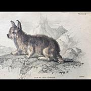 1800's Jardine Lizars Hand Colored ISLE of SKYE TERRIER Dog Print