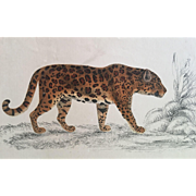 19th Century Oliver Goldsmith LEOPARD Engraving