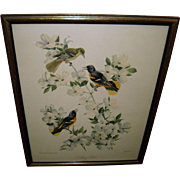 Vintage 1942 Quaker State Lithograph Baltimore Oriole #6 By Roger Tory Peterson