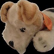 Steiff's Rare Cosy Fox Terrier With ID