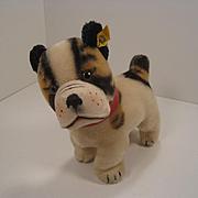Steiff's Medium Sized Post War Bully Bulldog With IDs