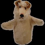 Steiff's Mohair Foxy Fox Terrier Hand Puppet With ID