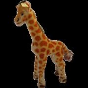 Steiff's Medium Sized Mohair Giraffe With IDs