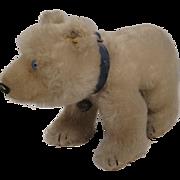 Steiff's Medium Sized White Mohair Polar Bear With IDs