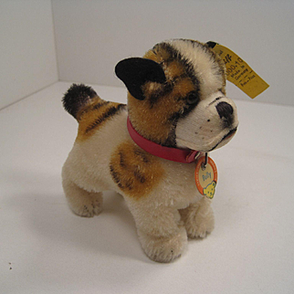 Steiff's Smallest Postwar Bully the Bulldog With All IDs
