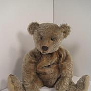 Steiff's Adorable and All Original Very Early Dark Blonde Mohair Teddy Bear With Blank Button
