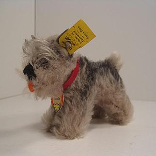 Steiff's Smallest Tessie Schnauzer With All IDs