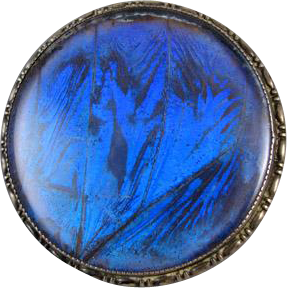 Signed Thomas Mott TLM England morpho butterfly wing under glass sterling silver vintage brooch pin
