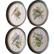 Set of Four PH Gönner European Bird Prints in Oval Frames