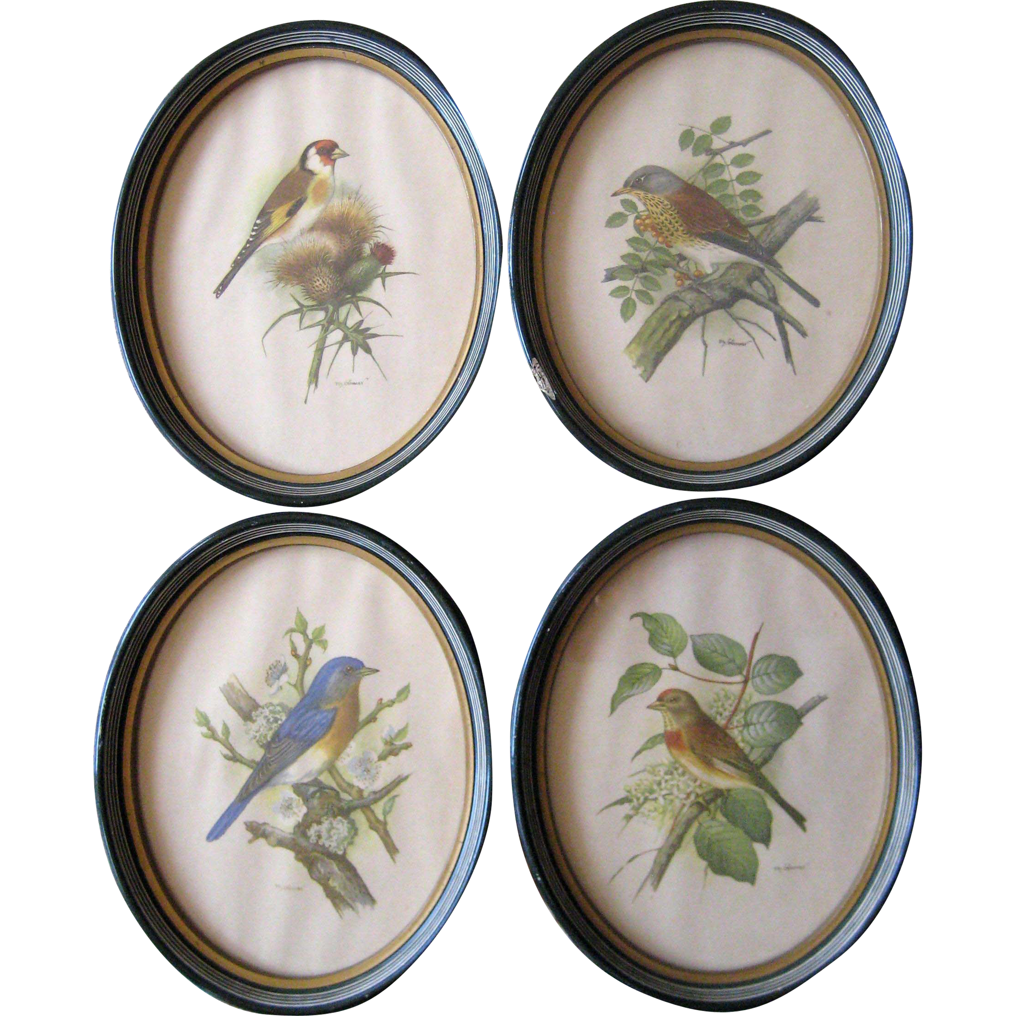 Set of Four PH Gönner European Bird Prints in Oval Frames