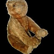 Mohair Steiff Teddy Bear - Jointed, Button Eyes - Circa 1905