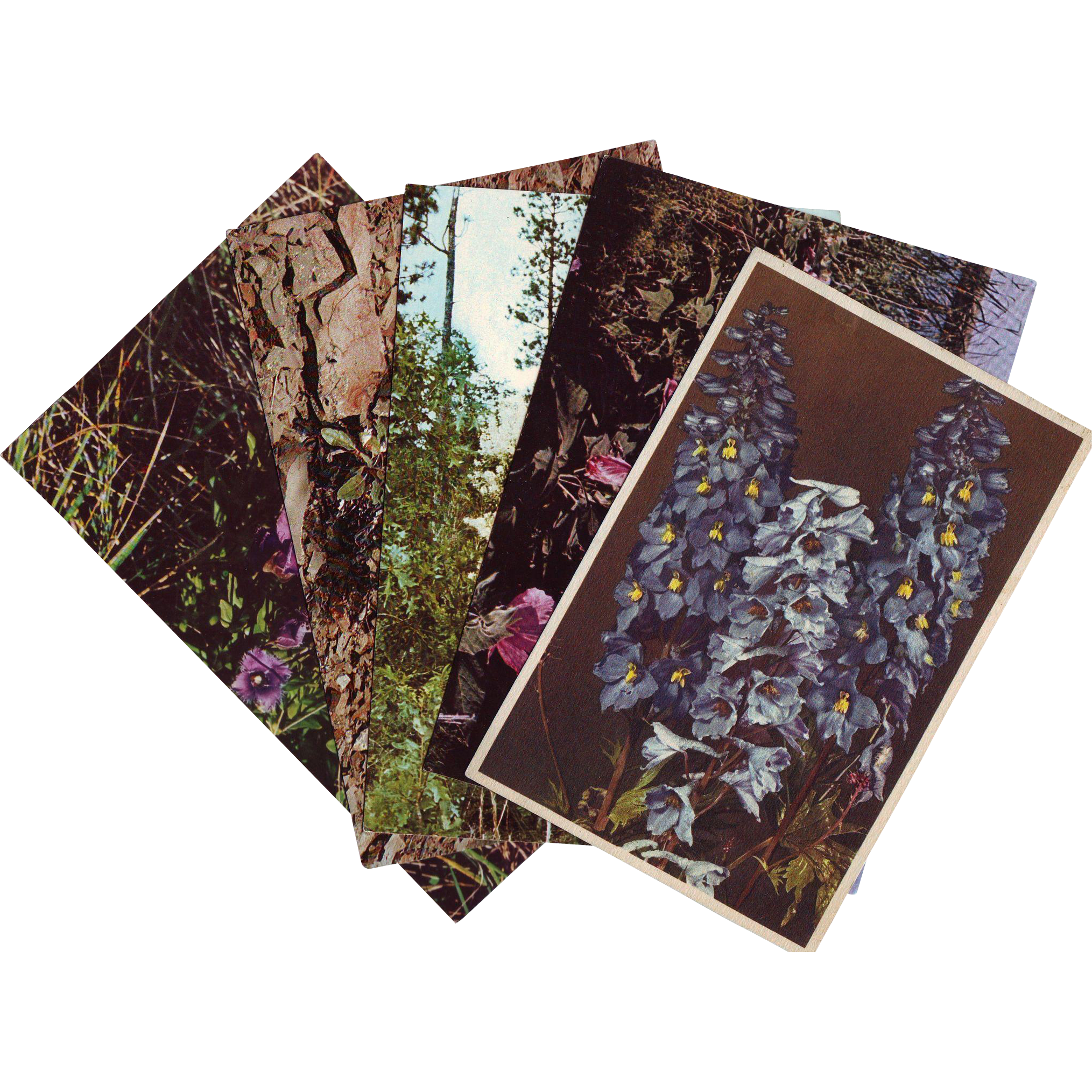 Six Vintage Real Photo RPPC Postcards of Wildflowers - Unused