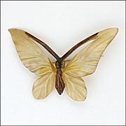 French Art Deco Natural Horn Butterfly Pin