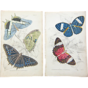 Two Original Hand Colored Butterfly/Moth  Prints from The Naturalist's Library, Ca. 1830-1840