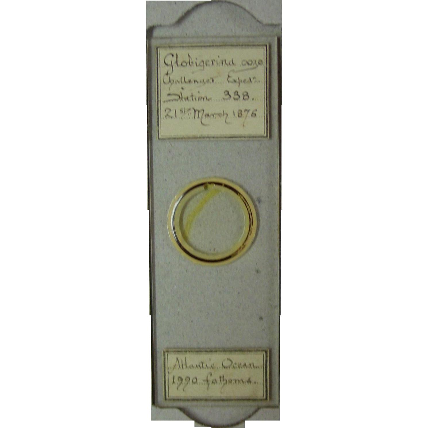 Desirable 1876 HMS Challenger scientific microscopic slide