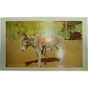 "Original Vintage Cabinet Color Photograph of Donkey/Burro Saddled 559 They Call Me ""Satan"" by Hook Photo."
