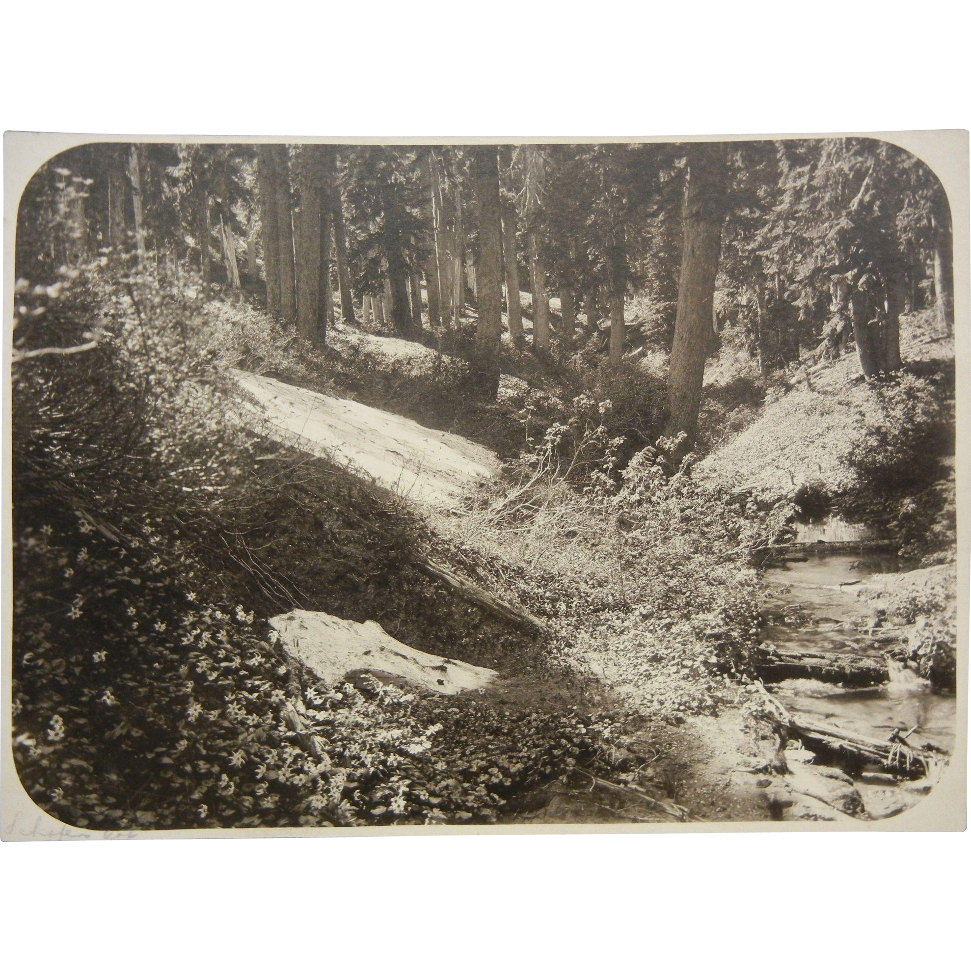 Vintage Original B&W Nature Photograph Signed Schafers Gap Washinton State