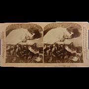 "Vintage Original B&W Stereoview Photo - ""Tired of Play"" Sleeping Child & Cat"