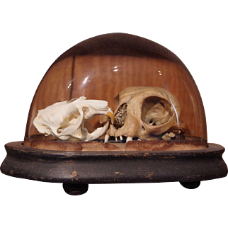 ** Glass Dome With Skulls **