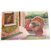 Embossed Parrot & Thanksgiving Turkey Visiting - 1907
