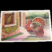 Embossed Parrot & Thanksgiving Turkey Visiting - 1907