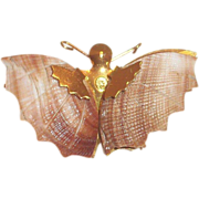 Darling Shell Winged Moth Pin