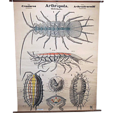 Leuckart Antique 1900s Zoology Wall Chart, Crustacea