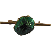 Antique Egyptian Revival Iridescent Green Beetle - Real Insect Brooch