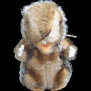 Steiff Nagy Beaver, 1968 to 1978, Steiff Button