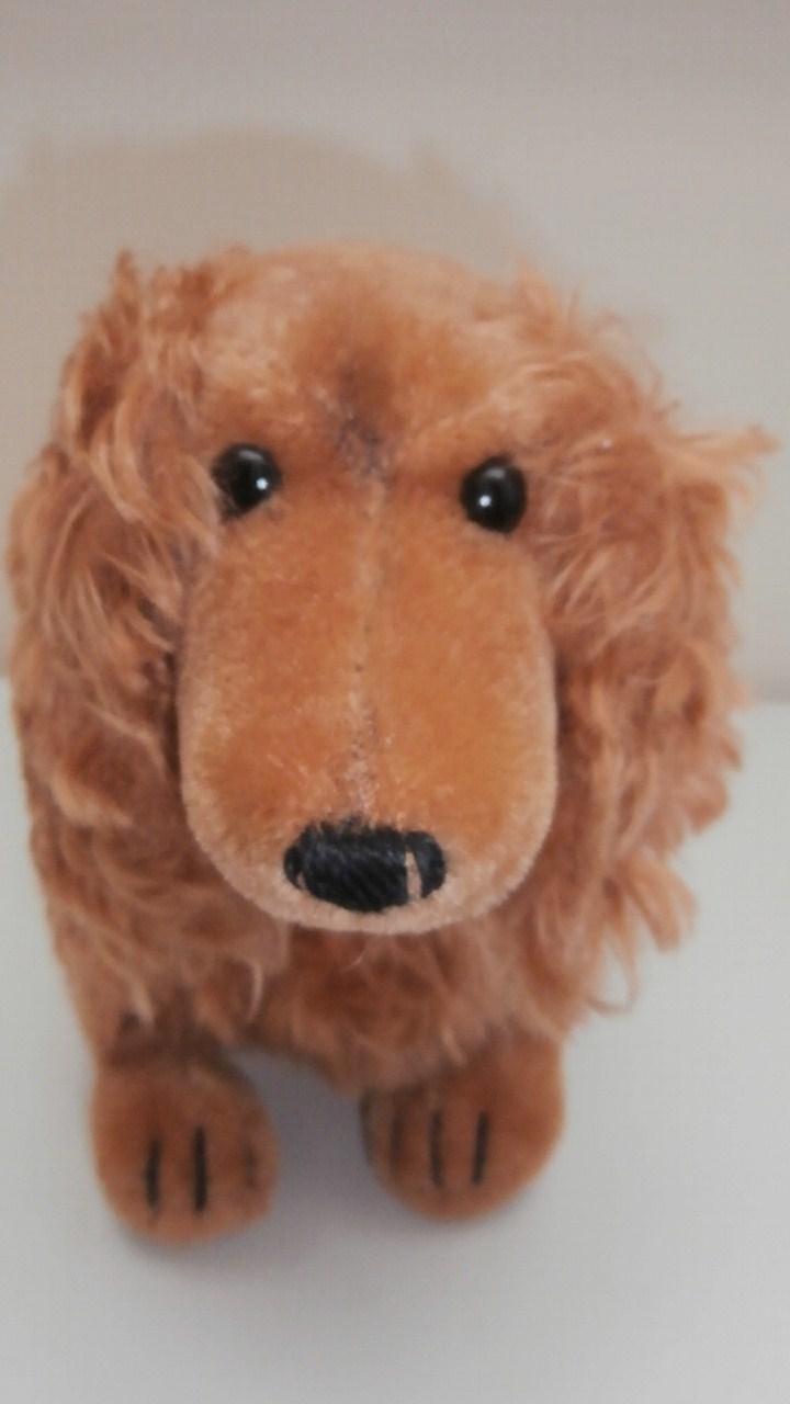 Steiff Waldi Dachshund Dog, No Button but Remains of U.S Zone, Germany Label 1947 to 1953