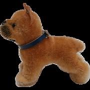 Steiff Sarras Boxer Dog ,1958 to 1964, Steiff Button