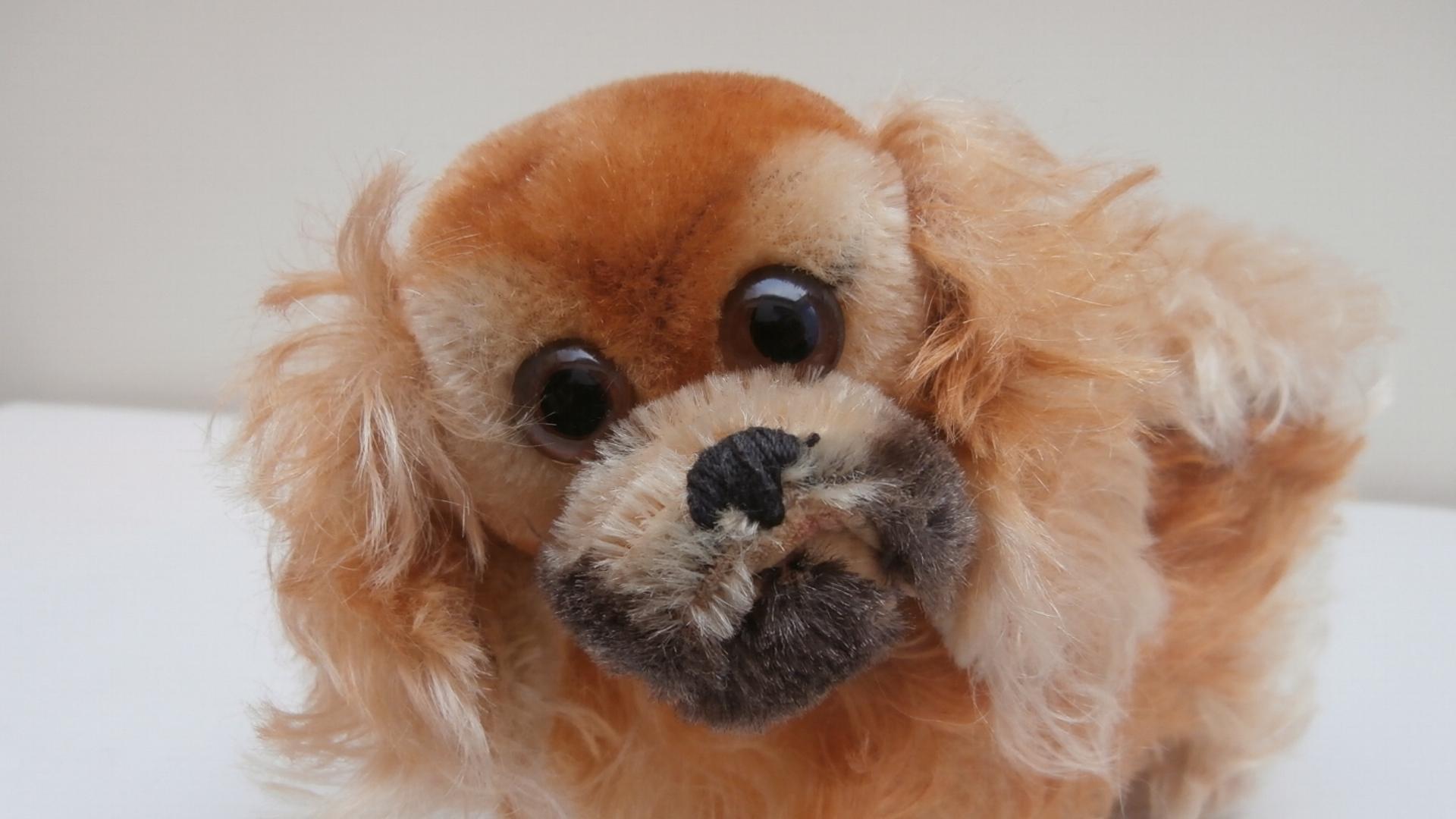 Gorgeous Steiff Peky Pekingnese Dog, 1959 to 1964, No Id's