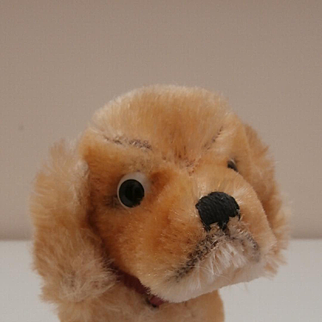 Sweet Steiff Dog, Revue Susi Cocker Spaniel. Steiff Button 1965 to 1967
