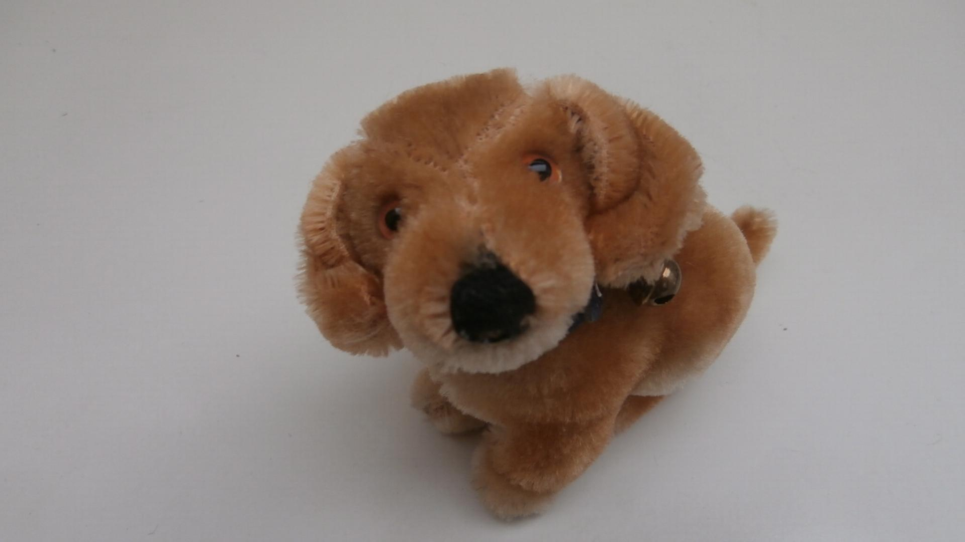 Steiff Bazi, Dachshund Dog, Steiff Button 1959 to 1964