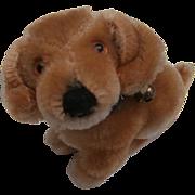 Steiff Bazi, Dachshund Dog, Steiff Button 1959 to 1964