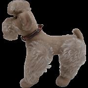 Lovely Steiff Snobby Poodle, 1954to 1958, Steiff Button