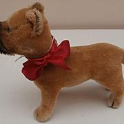 Steiff Sarras Boxer Dog, No Id's, 1966 to 1970