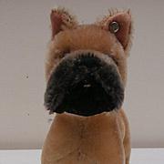 Steiff Sarras, Boxer Dog, Steiff Button, 1959 to 1964