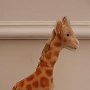 Steiff Giraffe , 1967 to 1974, Steiff Button