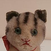Steiff Susi Cat, Felt Ears, 1956 to 1964, Button A/F