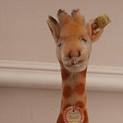 Wonderful Steiff Giraffe, 1968 to 1974, Steiff Button, Yellow Flag and Steiff Chest Tag
