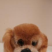 Steiff Peky Pekinese Dog, Steiff Button,1968 to 1976