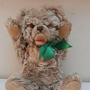 Sweet Steiff Zotty Teddy Bear, No Id's 1968 to 1978