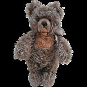 Steiff Zotty Teddy Bear, 1959 to 1964, No Id's