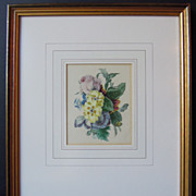 Pair of Beautiful Framed Hand Painted Botanical Prints Ca. 1840-1850
