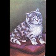 Cat Post Card Artist Signed