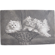 THREE Post Cards Total Persian Cats Artist Signed