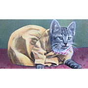 Post Card with Dressed Cat Animal 1911